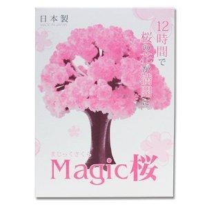 OTOGINO マジック桜