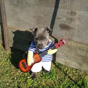 ギター犬 コスチューム